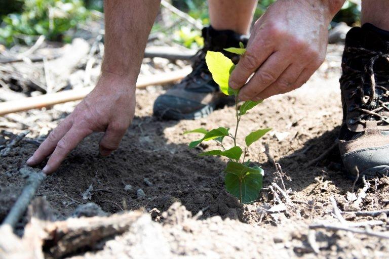 Den za obnovu lesa 2021 se koná 16. října i ve vašem kraji